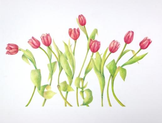 Nine Tulips Twirling, reshot 4-8-19